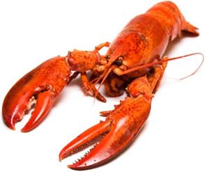 Seafood-shrimps